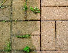 Advantages & Disadvantages of Block Paving - Weeds and Moss on a Block Paving Driveway