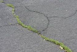 ADvantages & Disadvantages of tarmacadam - Weeds breaking through a tarmacadam surface